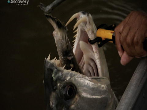 River Monsters: De mest Bizarre: Kvælnings-fare