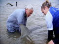 River Monsters: Hoe gehaaid is deze haai?