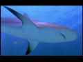 The Ultimate Guide to Sharks: Vibraties en haaienvisie