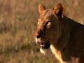 Dual Survival 2: Stalked By Lions