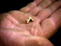 Gold Rush Alaska: Packed With Gold