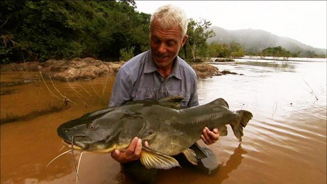 Largest Amazon Catfish Muscular Amazon Catfish