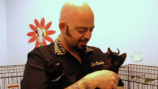 What s in store my cat from hell animal planet for Jackson galaxy shop
