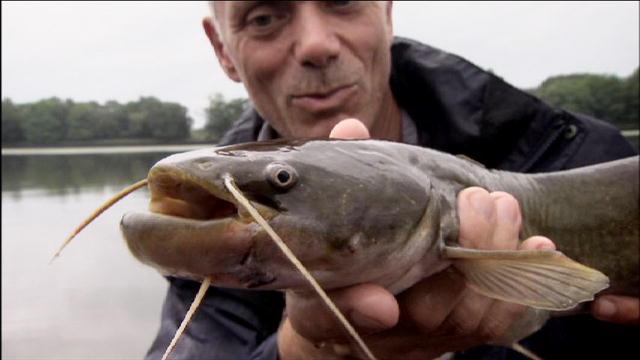 Chernobyl Animal Mutations Fish