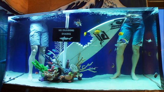 Reveal skateboard tank tanked animal planet for Atm fish tank