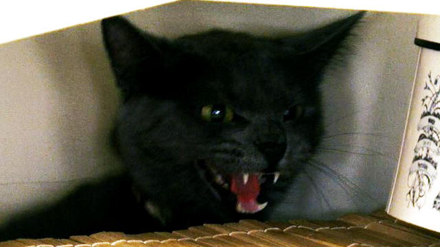 My Cat From Hell: Hellish Cat Supercut