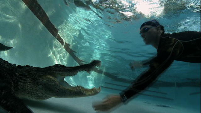 Gator in my swimming pool gator boys animal planet for Rocky mountain house swimming pool schedule