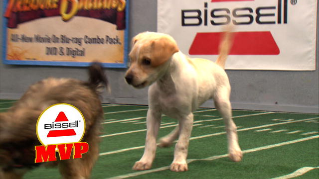 Puppy Bowl VIII