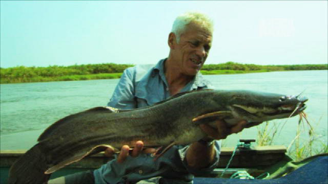 river monsters catfish