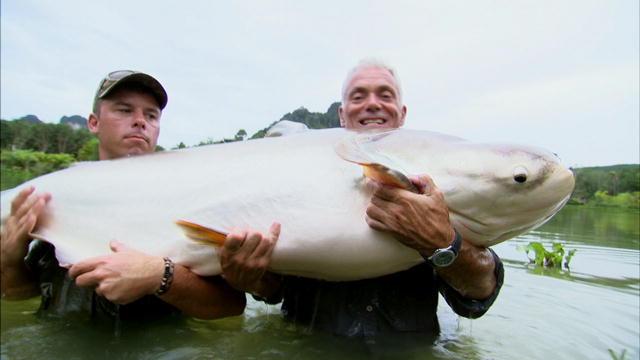 mekong giant catfish river monsters