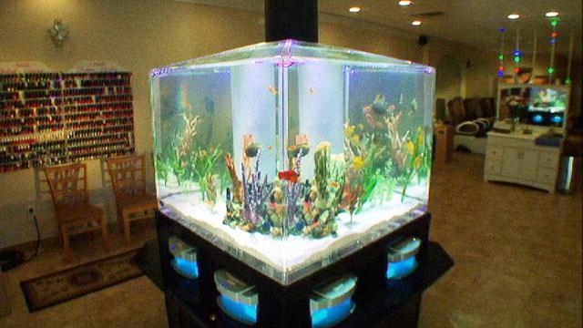 Fish Tank Bed Tanked