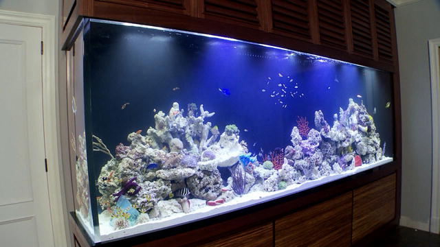 favorite tanks feng shui living reef tank tanked animal planet