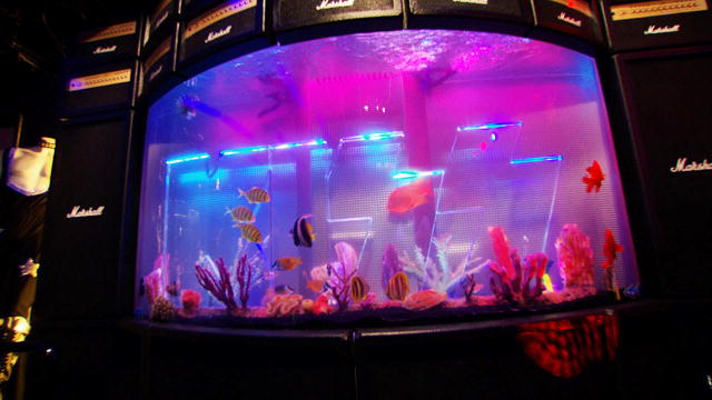 Reveal kiss tank tanked animal planet for Atm fish tank