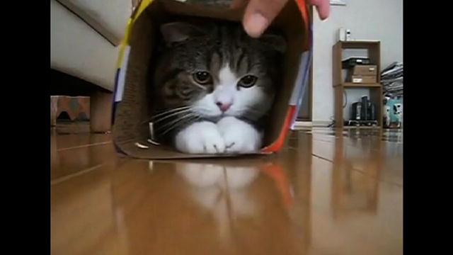 Maru Sliding Box Cat