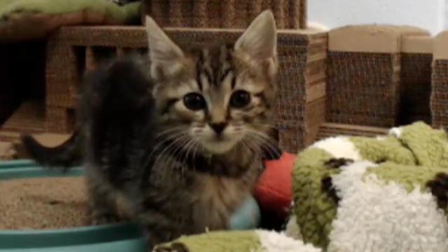 kitten cam live stream