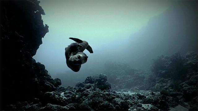 Mermaids Real Videos Are Mermaids Real