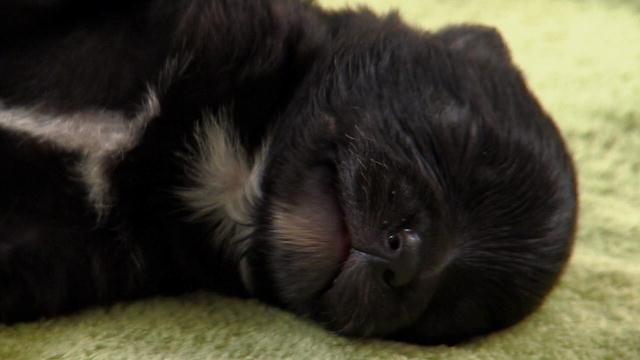 tv shows too cute videos cute puppies
