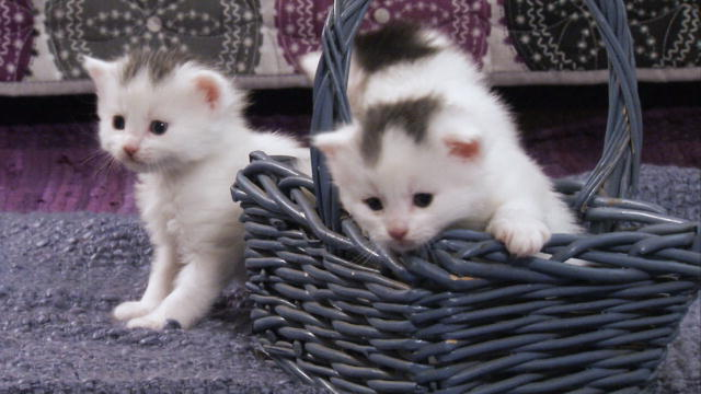 A Basket Full Of Kittens Too Cute Animal Planet