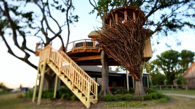 Behind The Build: Bird Nest Tree | Treehouse Masters | Animal Planet Animal Planet Online Games