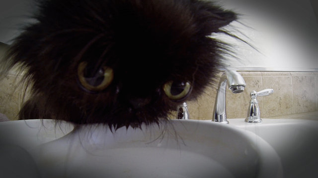 cat girl tf