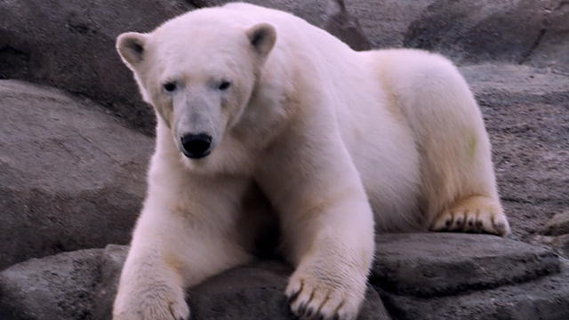 Health: Polar Bear Visit