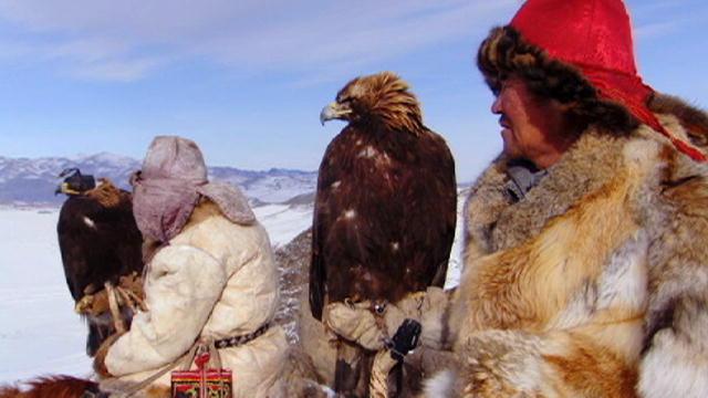 Eagles Hunting Fish Eagle Hunts a Fox | Human