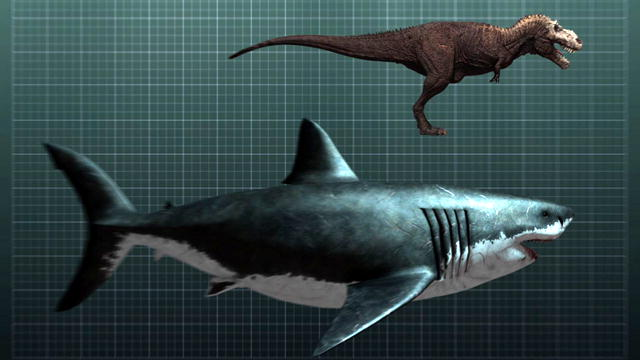 Shark Week: The Nightmarish Megalodon : Video : Discovery Channel