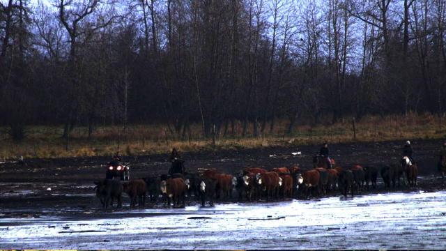 Alaska The Last Frontier Meet The Kilcher Family Video /page/243