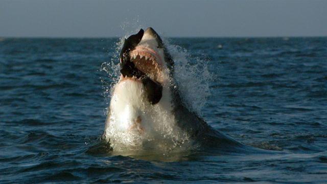 Minecraft | FISHING CHALLENGE – Legendary Monster Fish ... |Legendary Sharks