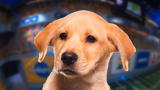 Puppy Bowl IX Player Profiles: Meet Chestnut