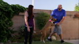 Pit Bulls & Parolees: The Perfect Fit for Maxwell