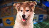 Puppy Bowl IX Player Profiles: Meet Aurora