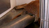 Weird True & Freaky: Dog's Head Stuck In Pipe