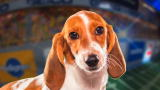 Puppy Bowl IX Player Profiles: Meet Sally