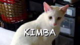 My Cat From Hell: Kimba's Follow-Up