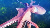 Weird True & Freaky: Octopus Steals Camera