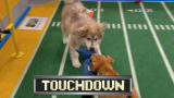 Puppy Bowl IX: Touchdown Butterscotch!