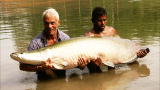 River Monsters: Battling an Arapaima