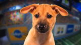 Puppy Bowl IX Player Profiles: Biscuit