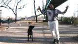 Puppy Bowl VII: Dog Park Warm Up