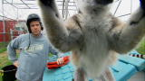 Dirty Jobs: Attack of the Lemur