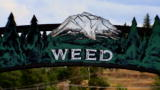 Weed Country: The Town of Weed
