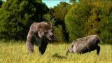 Prehistoric Washington DC: Bear Dog