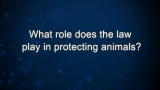 Curiosity: Wayne Pacelle: What role does the law play in protecting animals?