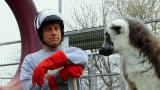Dirty Jobs: Lemur Alone