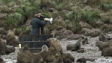 Frozen Planet: Fending Off Fighting Fur Seals