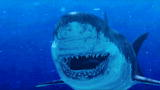 Prehistoric Washington DC: Mega Shark