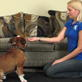 dog training video: down