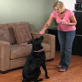 dog training video: sit