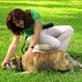dog training video: crawl